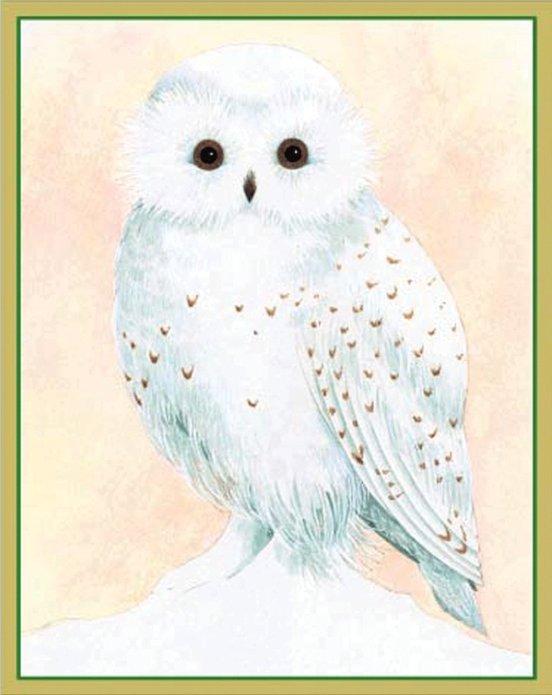 postkort sneugle