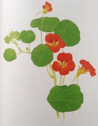 Karen K blomst tallerkensmækker