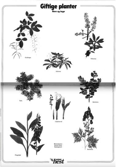Karen K. miniplakat giftige planter