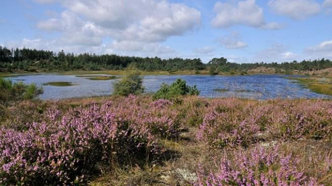 Syvårssøerne naturstyrelsen
