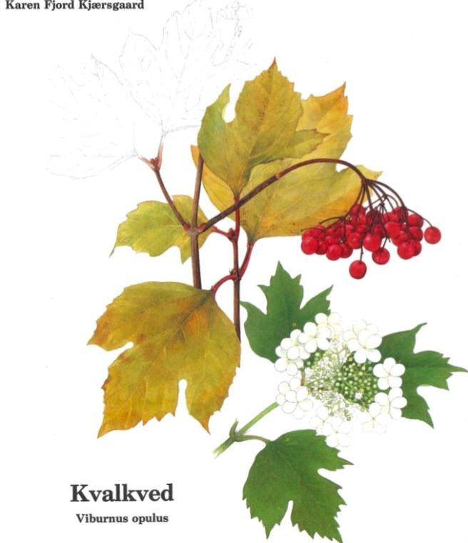 karen-kjaersgaard-kvalked_1024