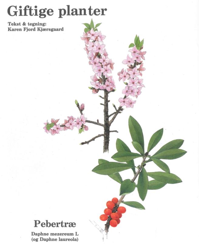 karen-kjaersgaard-pebertrae